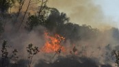Brazilian Amazon fires surge in July