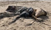 Mysterious 15-foot creature found washed up on British beach