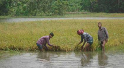 Boost monitoring to minimise farmers' losses: Razzaque