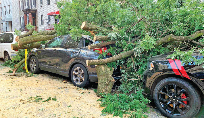 Cars are buried under the remains of a fallen tree