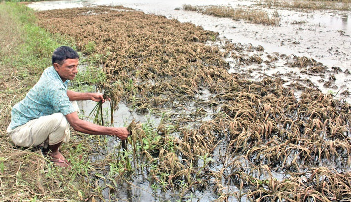 Farmers suffer as flood lingers
