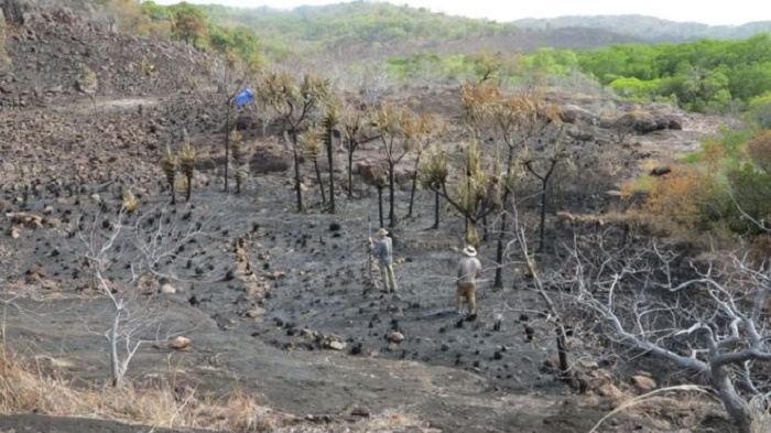 Indigenous Australians 'farmed bananas 2,000 years ago'