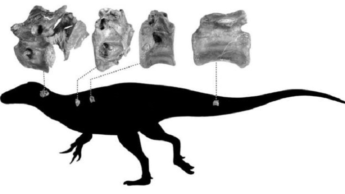 New dinosaur related to T. rex discovered on Isle of Wight