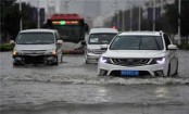 Typhoon Bavi halts classes in northeast China