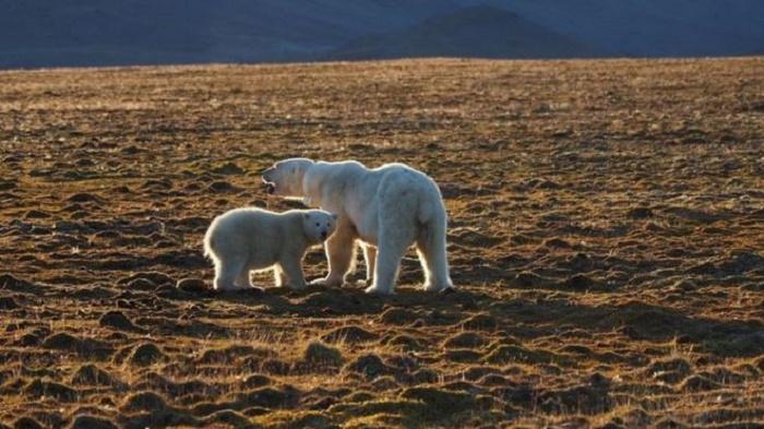 Polar bear kills man in Norway's Arctic Svalbard islands