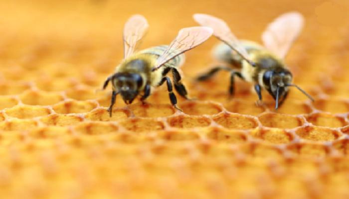 Honeybee venom 'kills some breast cancer cells'