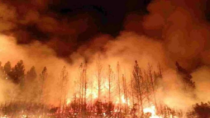 Record CO2 emissions for Arctic wildfires: EU