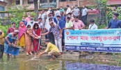 Upazila fisheries office releases fish fry into a pond