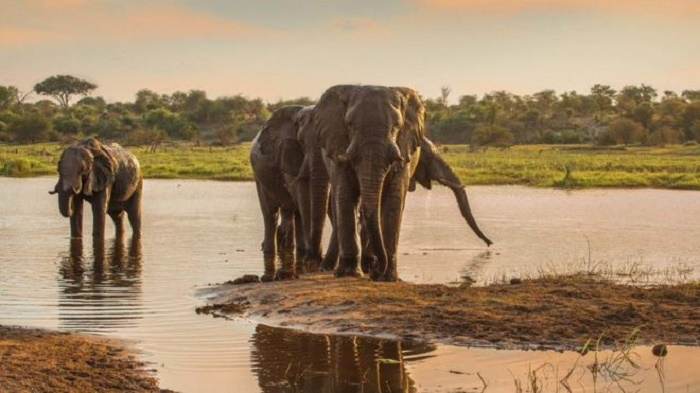 Secrets of male elephant society revealed in the wild