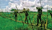 Bangladesh Army cross a bamboo bridge with relief materials