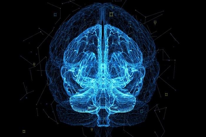 Key neuron for sleep regulation identified