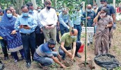 Dhaka North City Corporation Mayor Md Atiqul Islam plants a sapling