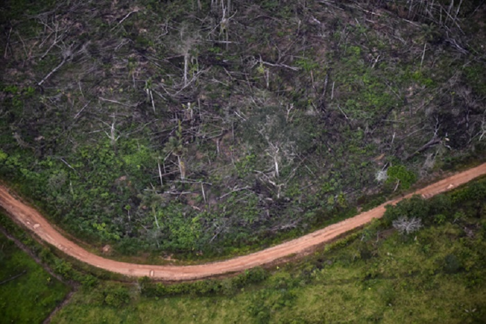 World lost 100 million hectares of forest in two decades: UN