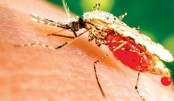 Asian mosquito species threatens African cities