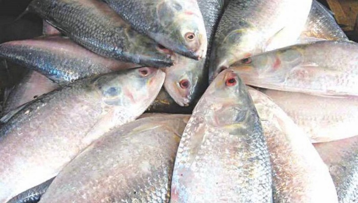 22-day ban on catching, selling Hilsa from October 14