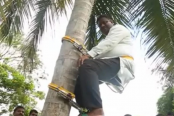 Minister climbs tree to address people about coconut shortage in Sri Lanka