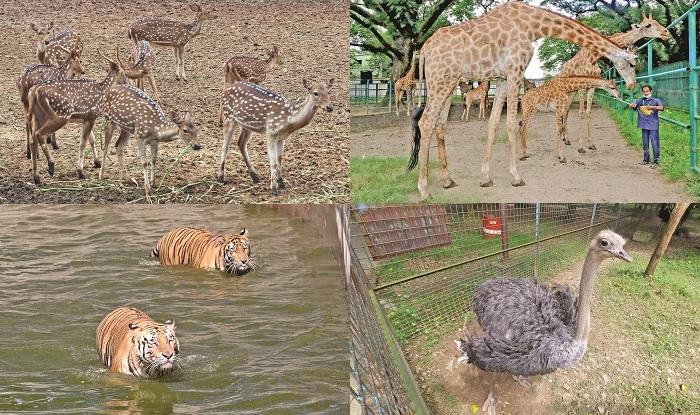 Zoo inmates enjoy serenity of nature