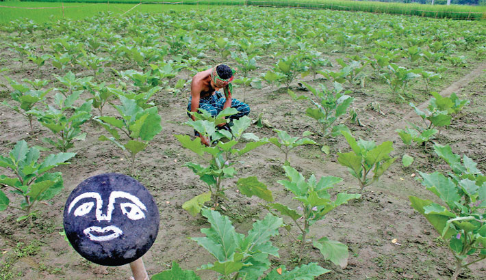 Farmer is uprooting weeds at his vegetable farm