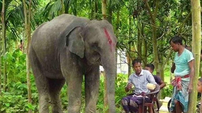 She dreamt of an elephant, her farmer husband got her one