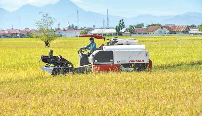 Indonesia starts developing food-bank estates