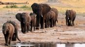 Zimbabwe: Elephants die from 'bacterial disease'