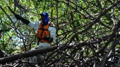 Brazil court blocks move to repeal mangrove protections