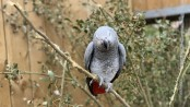 British zoo separates foul-mouthed parrots for swearing in front of visitors