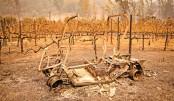 California wildfires turn Napa wine spots to ash