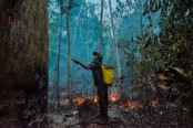 Fires spike in Brazil's Amazon, scientists say