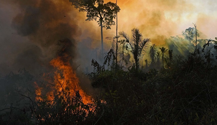 After Xi's climate surprise, no biodiversity announcement