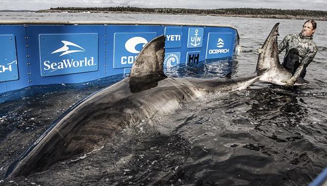 Massive 17-foot white shark dubbed