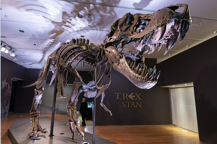 T-Rex fossil sells for record-breaking $31.8 mn