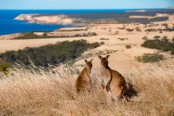 Australia unlikely to re-open for tourists until 'late next year'