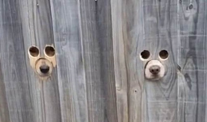 Genius pet owner makes dog-sized holes in fence so pooch can watch passers-by