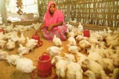 Poultry for Livelihood, Security and Better Health