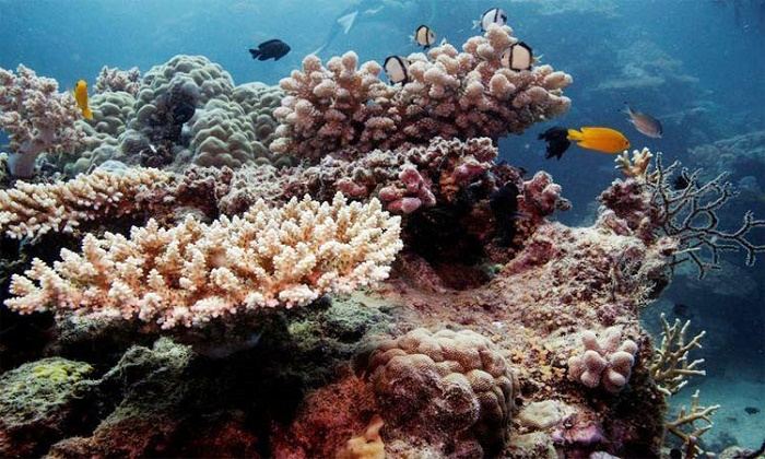 Great Barrier Reef's corals in steep decline