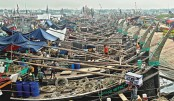 22-day ban on netting hilsa in the sea