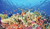 Great Barrier Reef lost  half of its corals