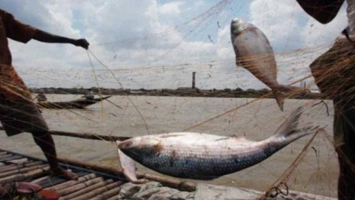 15 fishermen fined for defying Hilsa ban in Manikganj