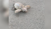 Rare white sea turtle found on South Carolina beach