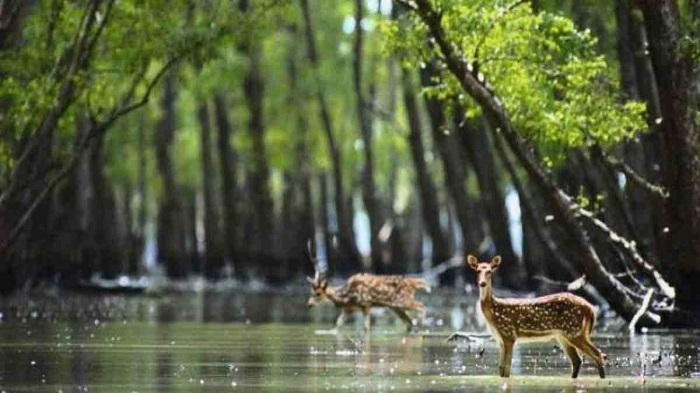 Sundarbans set to reopen to tourists soon