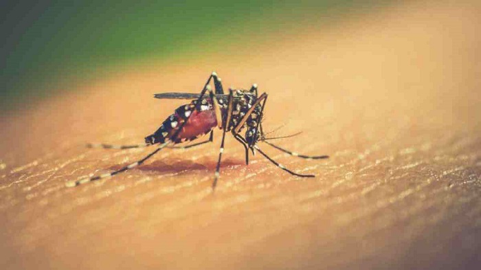 14 new dengue cases reported in 24hr