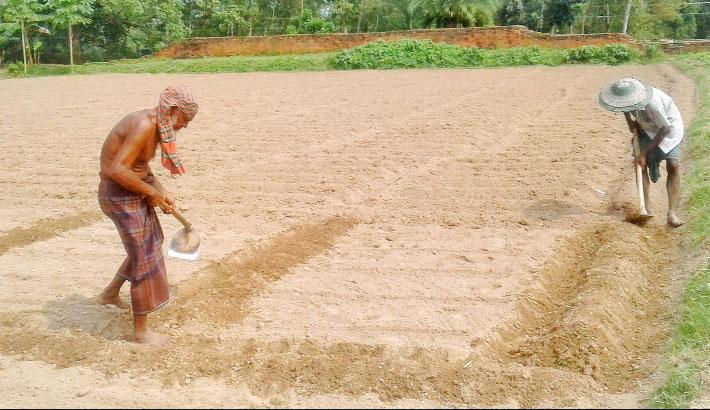 Farmers busy preparing seedbed for planting potato