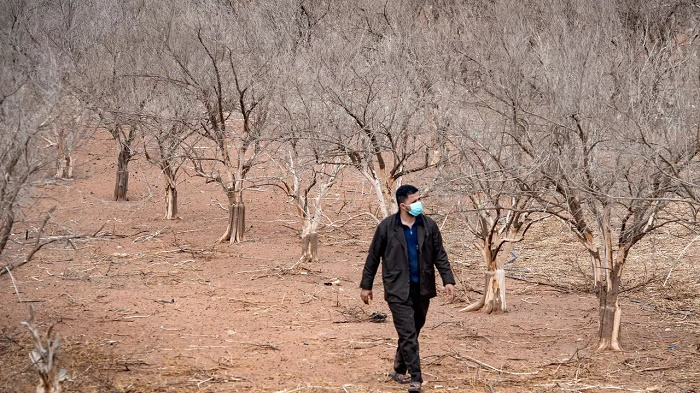 Drought casts shadow over prime Moroccan farming land