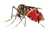 Dengue cases up