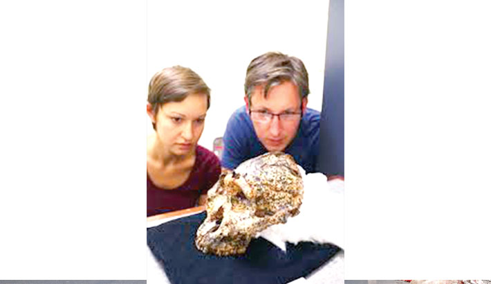 2-million-year-old skull of human unearthed