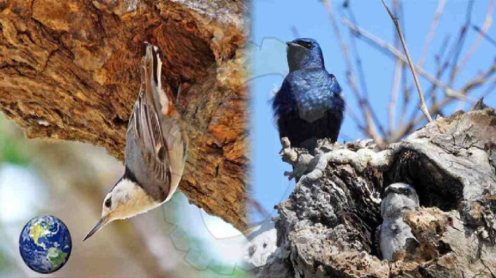 Noise, light pollution alter bird reproduction: study