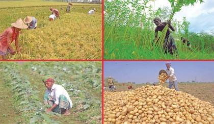 Govt plans Tk 1.5trn agri investment in 5 years