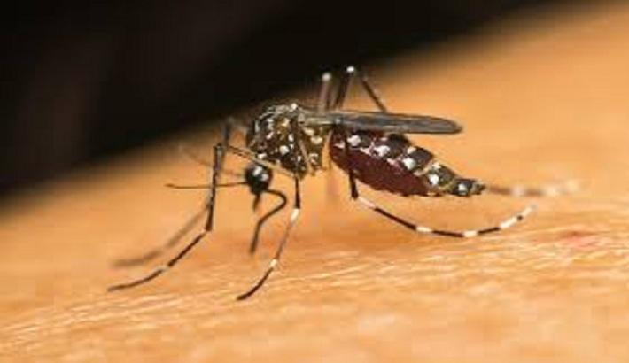 Dengue threat looming large