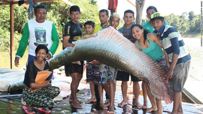 How Amazonians saved a 'Terminator' of the fish world